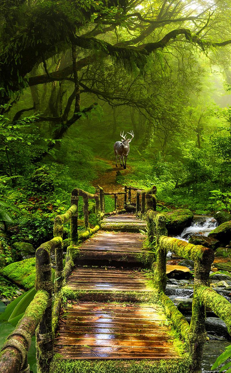 xt90579美式玄关树林小路小溪小桥麋鹿