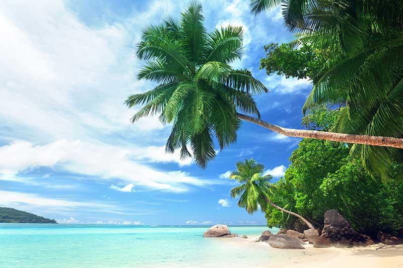 xt14032美式海滩沙滩椰树马尔代夫蓝天风景