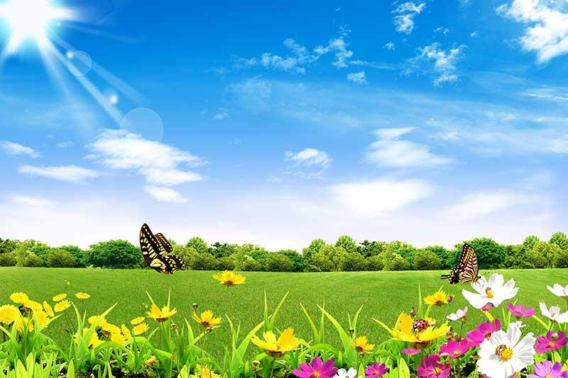 xt14183美式田园草地鲜花蝴蝶蓝天白云阳光