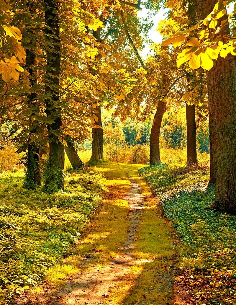 xt17960美式田园金秋树林中小路枫叶